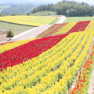 北海道,風景,花畑,写真,平野,Line着せかえ